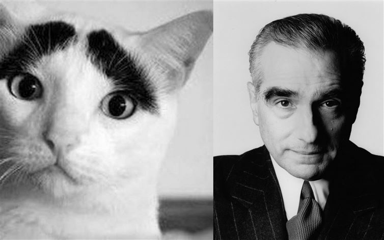 CAT THAT LOOKS LIKE MARTIN SCORSESE FOUND IN NEW YORK