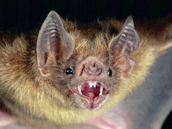 NEW BATMAN 'SCARILY REALISTIC'