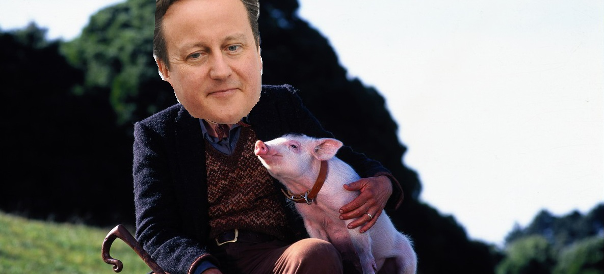DAVID CAMERON TO STAR IN BABE REMAKE