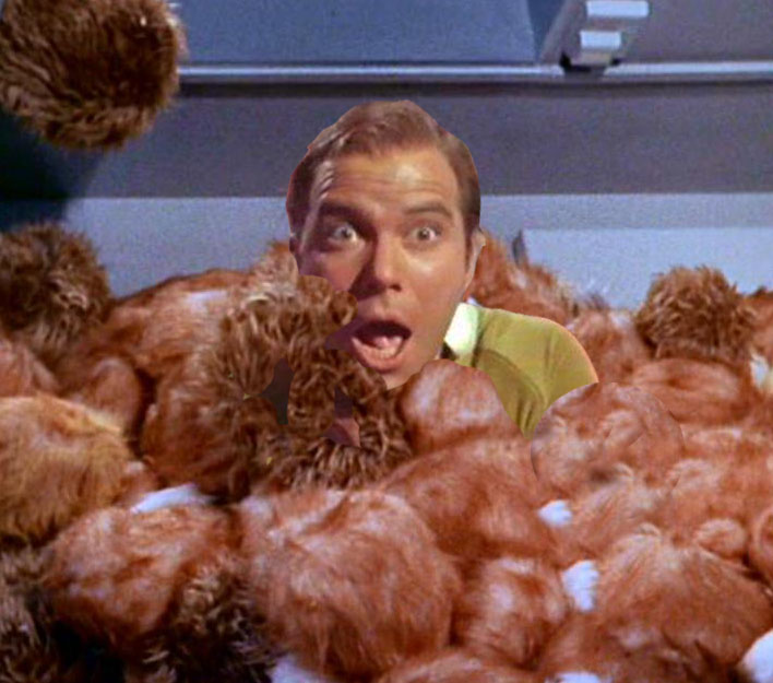NEW STAR TREK TO FOCUS ON TRIBBLES