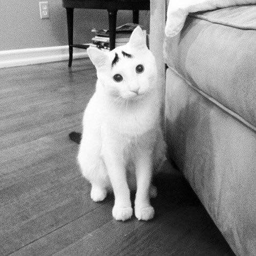 CAT THAT LOOKS LIKE MARTIN SCORSESE FOUND IN SAN FRANCISCO