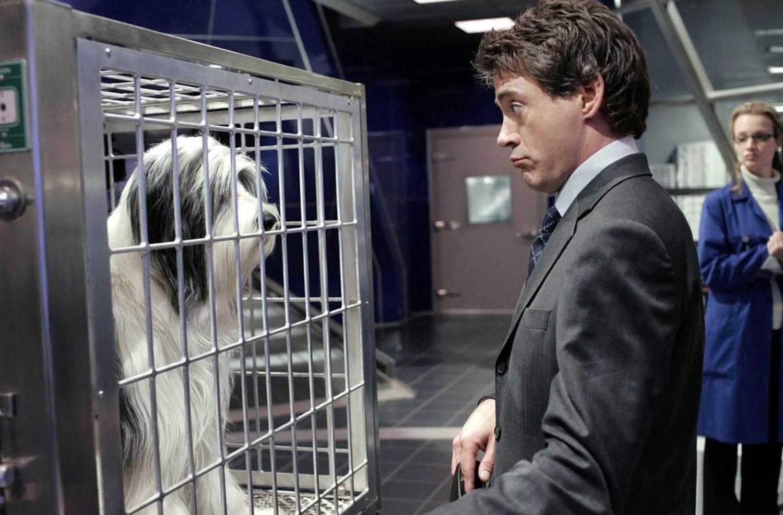 ROBERT DOWNEY JR'S DOG TALKS DOCTOR DOOLITTLE